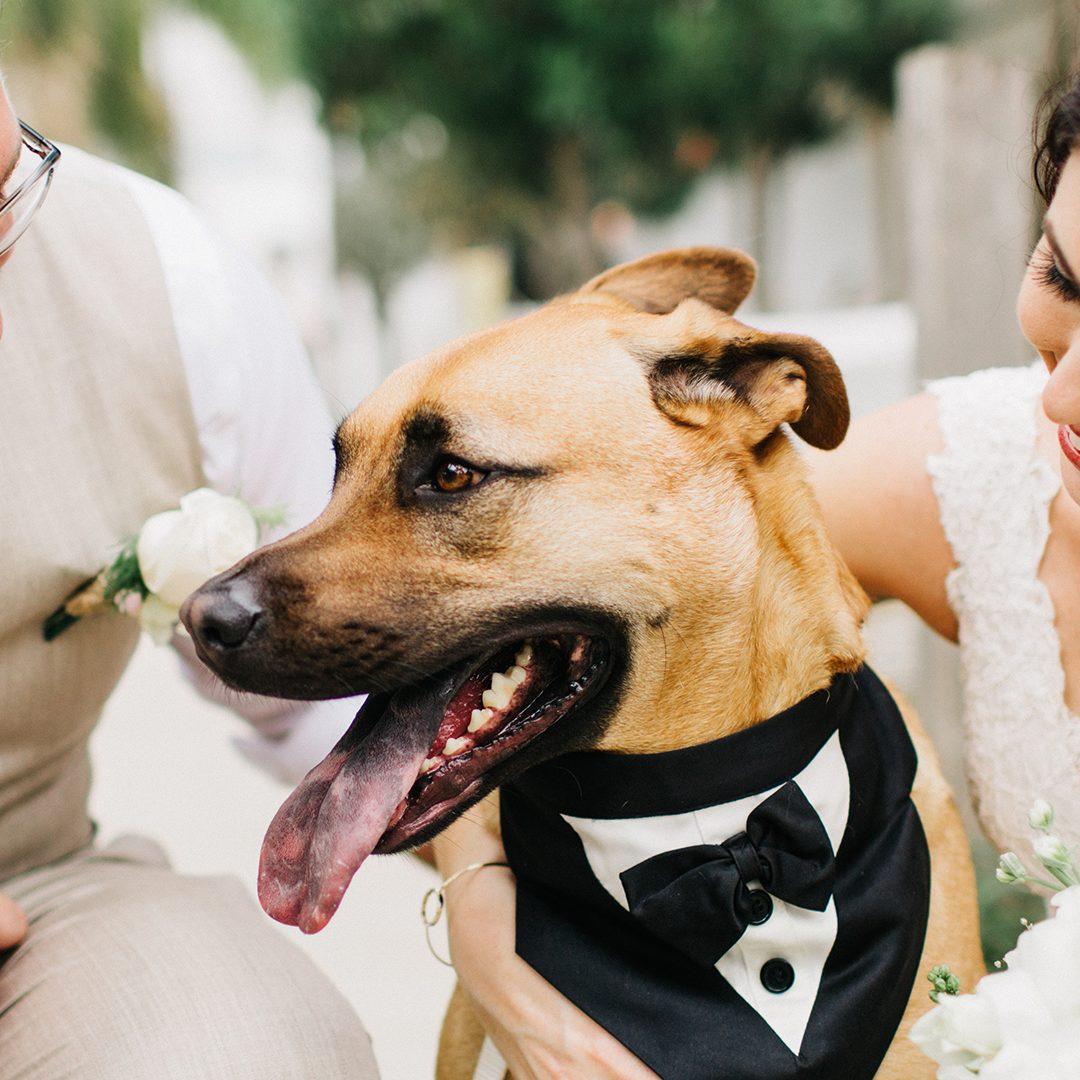 Pets allowed wedding venue